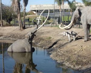 Tar Pits w L.A. Scena z tonącą mamucicą, której szczątki uczeni odkryli tysiące lat potem.